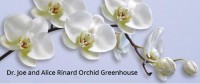Celebrate National Orchid Month