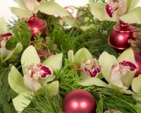 Holiday in Bloom at the Rinard Orchid Greenhouse