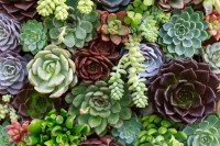Succulents, What's Not to Love?