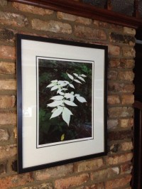 Photography by Barry Banks, on display at Rose Court